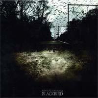Some Pedestrians - Blackbird