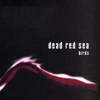 Dead Red Sea - Birds