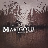 Marigold - Audible To Animals